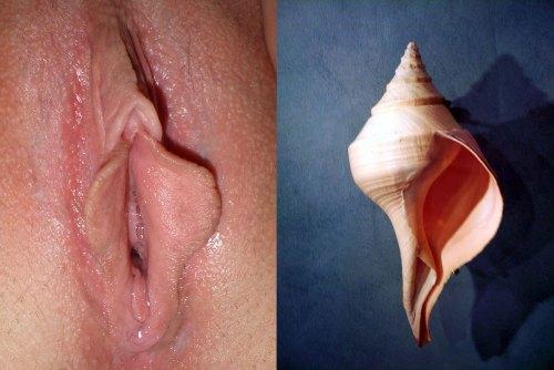 syrinx,vulve,lèvres