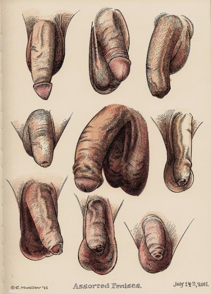 Assortiment de pénis par C. Mueller - 2011
